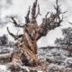 Uplift: Celebrating the Sierra Nevada
